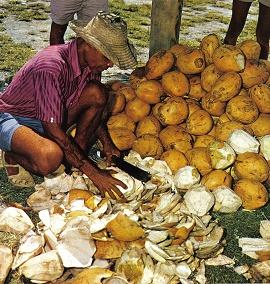 kokosovy olej vyroba